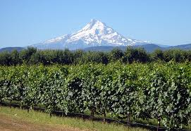 Gorge Wine Mt Hood