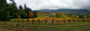 Oregon Fall Colors Vineyards