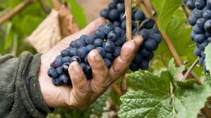 29-argyle-winery-pinot-noir-0186