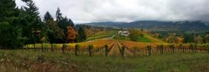 Oregon Fall Colors Vineyards