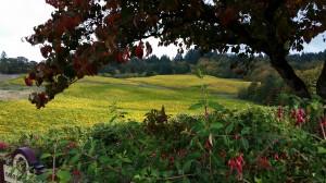 Wine View Pic